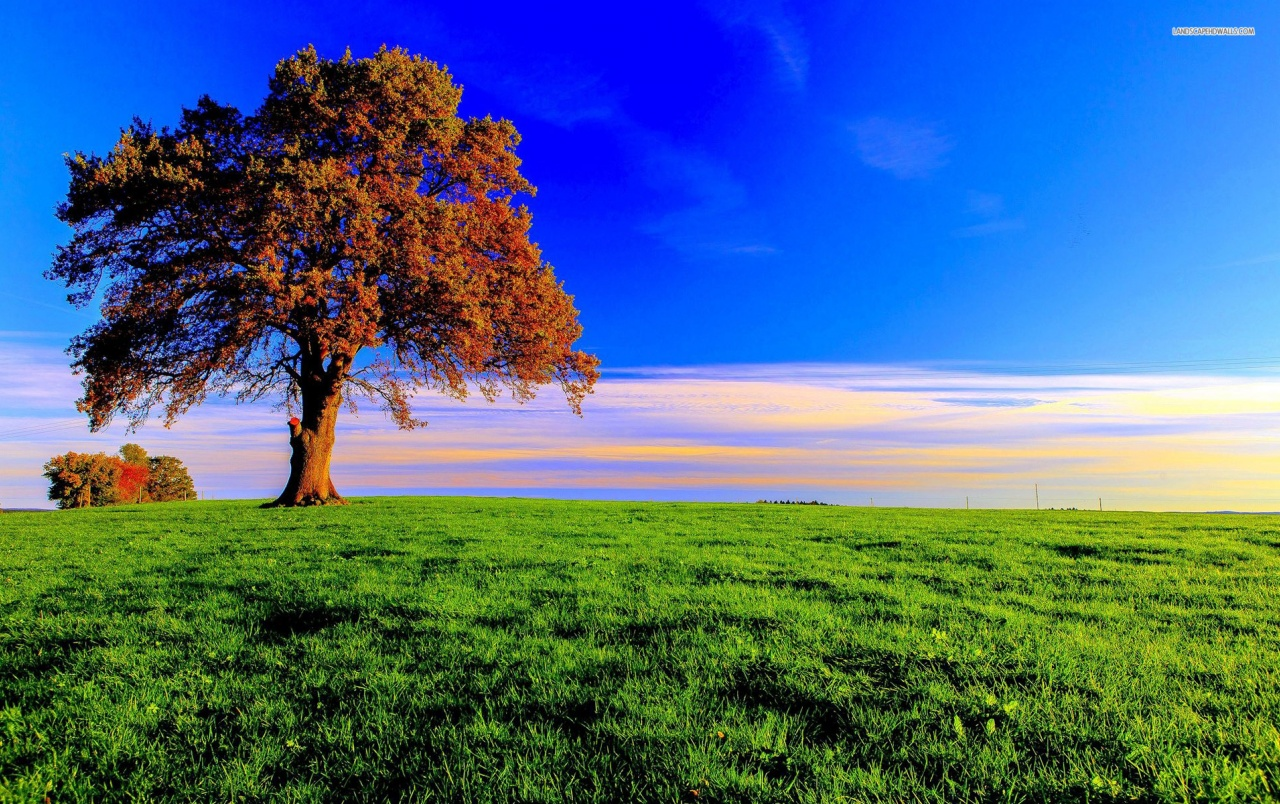 Nice Autumn Tree & Grass Field Wallpapers