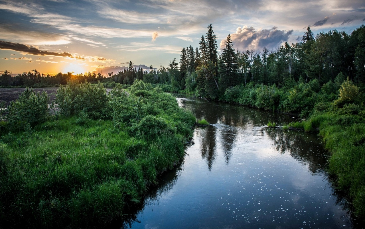 Nice River Trees Grass Sunset wallpapers