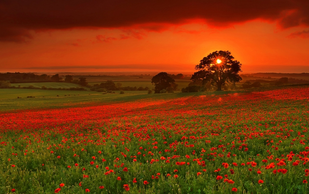 Beautiful red flowers evening wallpapers beautiful red flowers originalhd beautiful red flowers evening wallpapers izmirmasajfo Choice Image