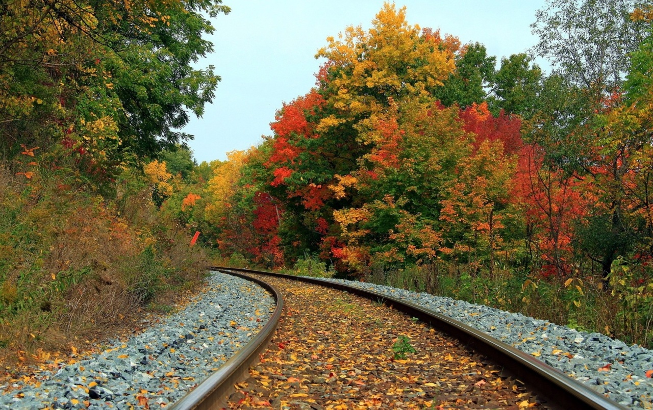 Autumn Forest & Train Tracks wallpapers