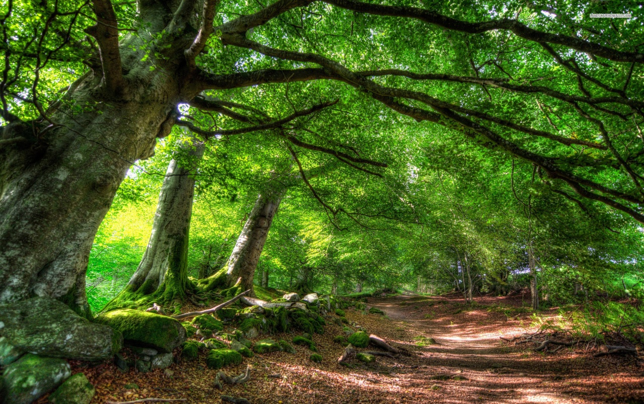 Green Forest & Path Wallpapers