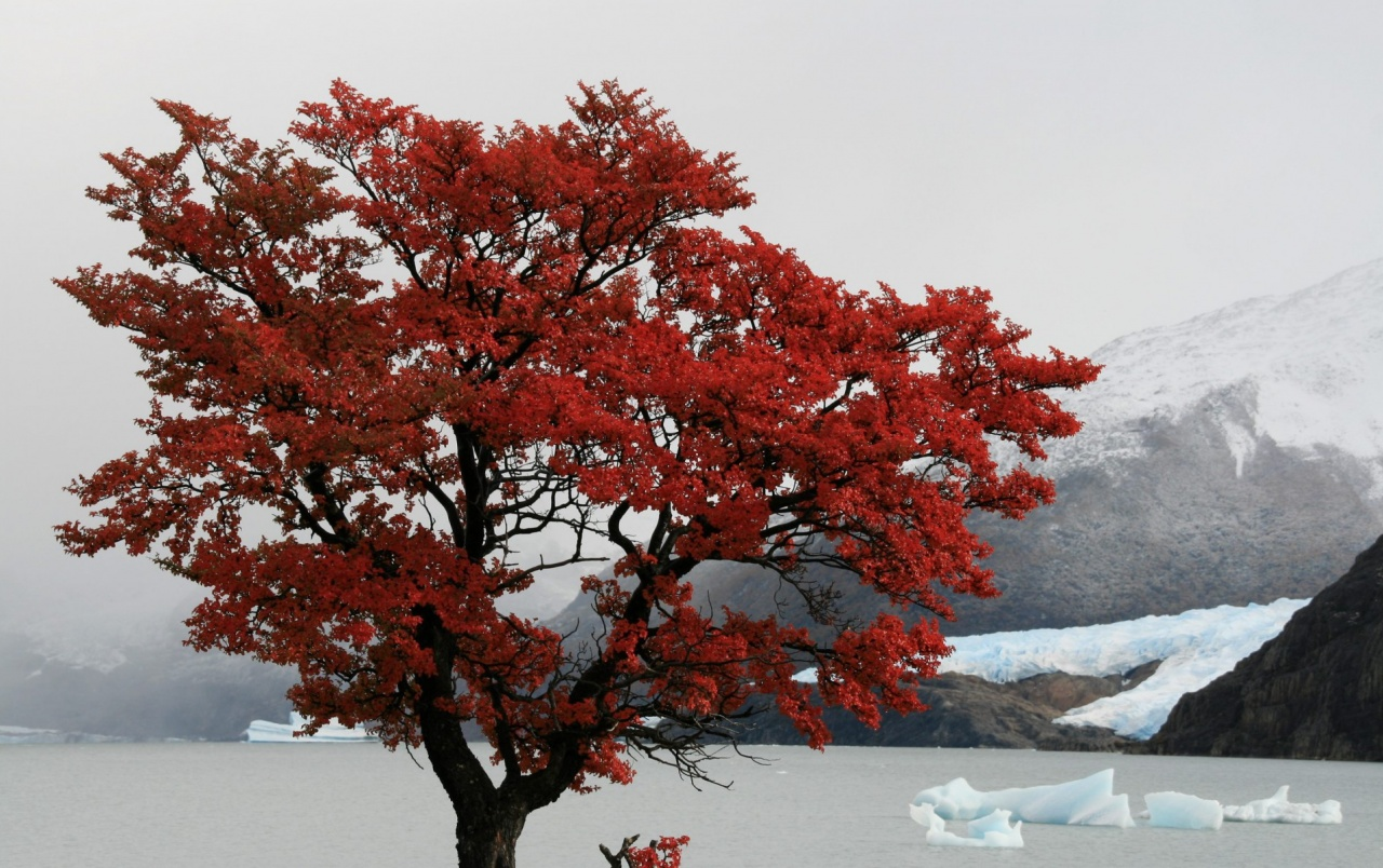 Red Tree Santa Cruz Province wallpapers