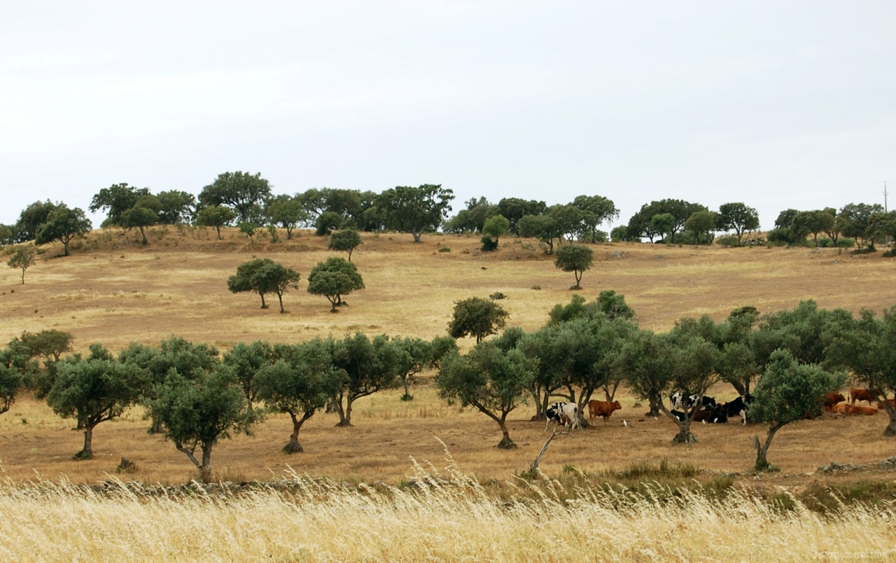 Alentejo Portugal One wallpapers