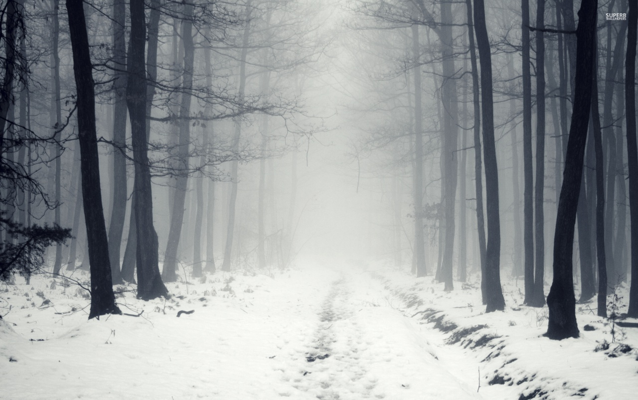 White Path Black Trees Foggy wallpapers
