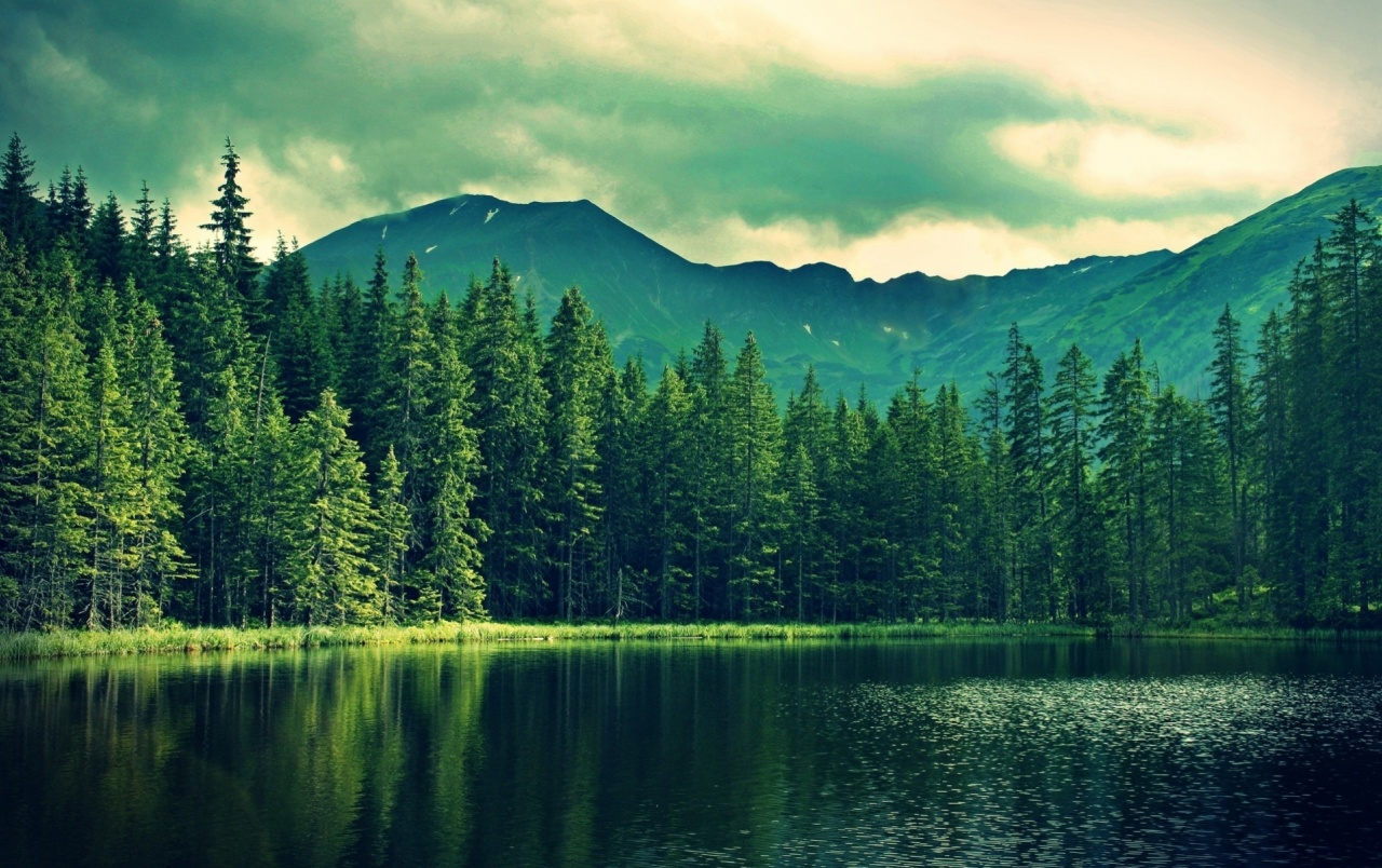 mountain green forest deep sea wallpapers | mountain green forest