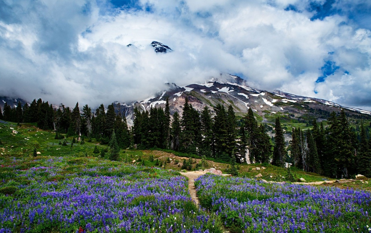 Amazing Washington Scenery wallpapers