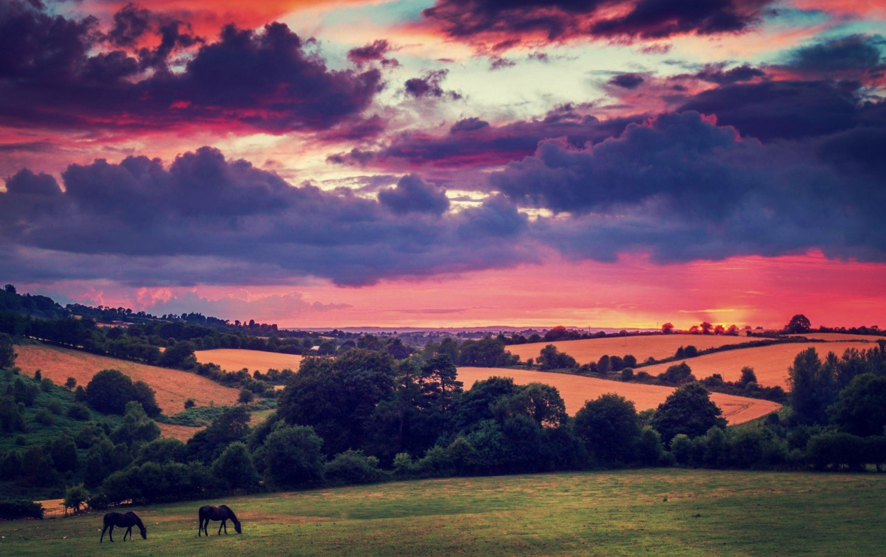 OriginalHD Hills Trees Horses Pink Sunset Wallpapers