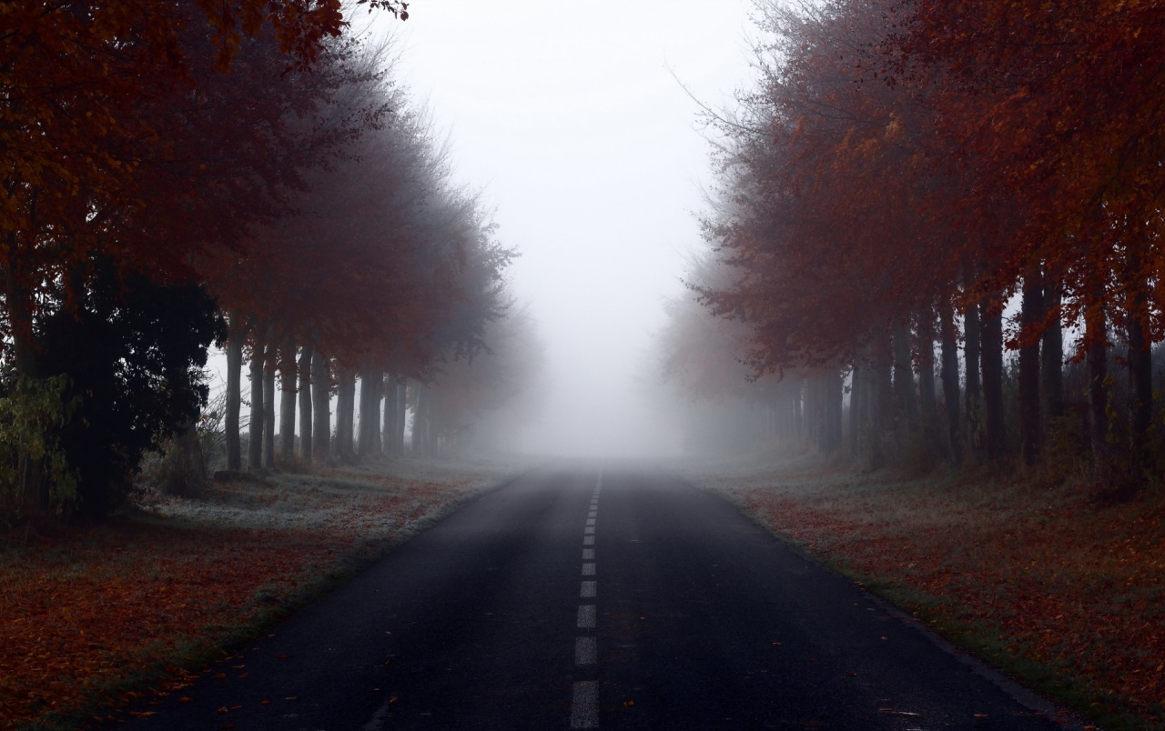 Red Autumn Trees Road Foggy wallpapers | Red Autumn Trees ...