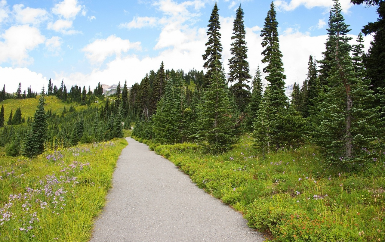 Pine Forest Road Meadow Rocks wallpapers