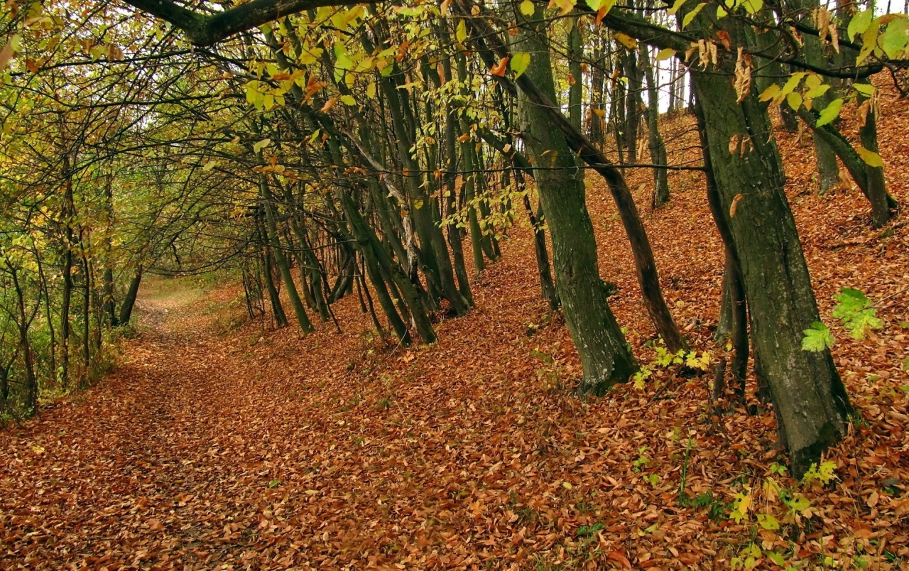 Dry Autumn Carpet Forest wallpapers  Dry Autumn Carpet