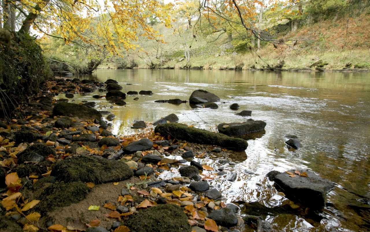 River Shore Tree Foliage Rocks wallpapers
