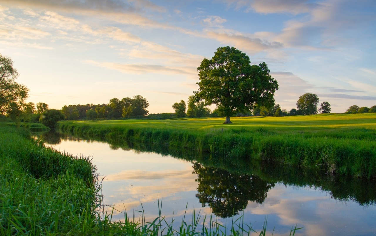 Grass Field Trees River Sunset Wallpapers