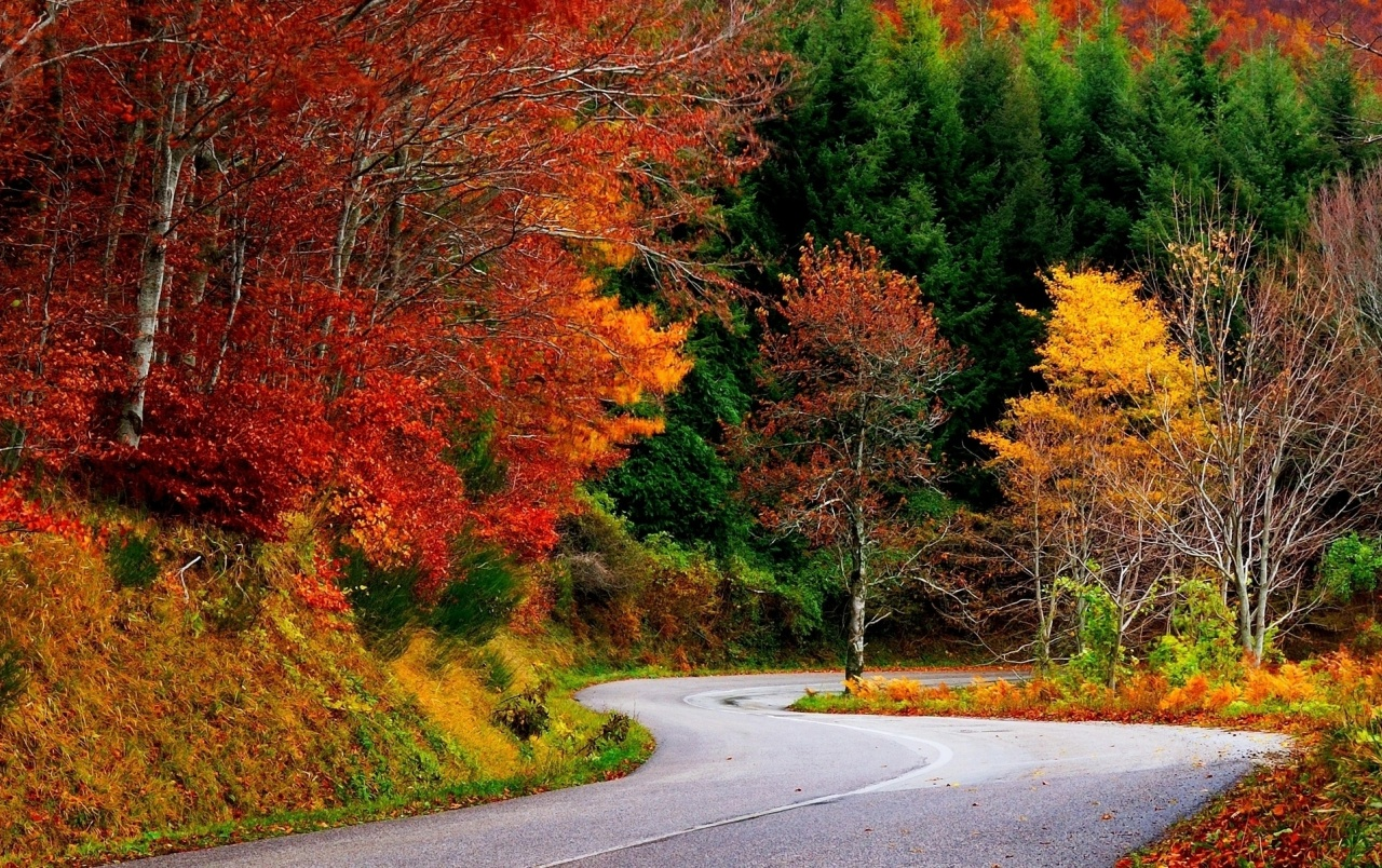 Colorful Autumn Trees & Street wallpapers