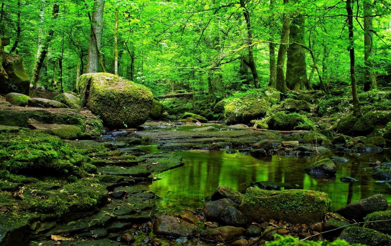 Grass Green Forest Water Rocks Wallpapers