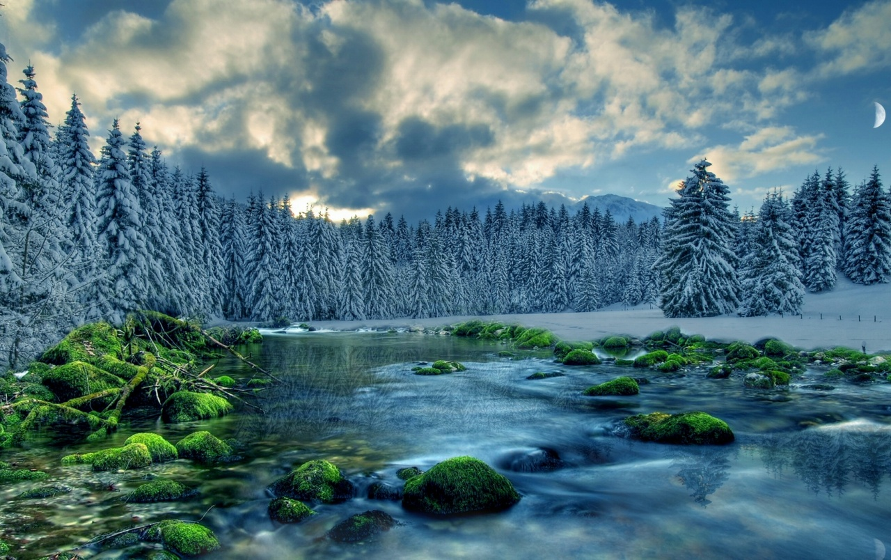 Snowy Forest River Mossy Rocks Wallpapers Snowy Forest