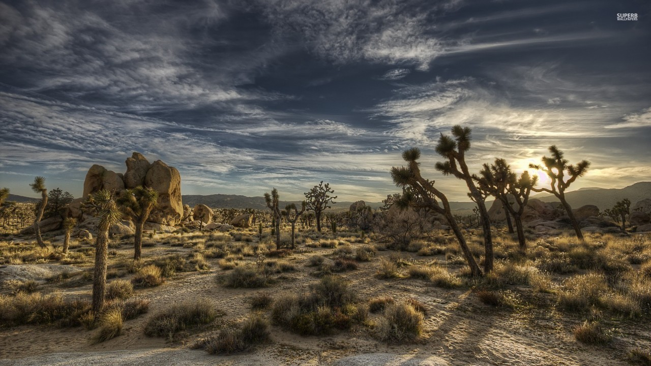joshua tree national park wallpapers | joshua tree national park