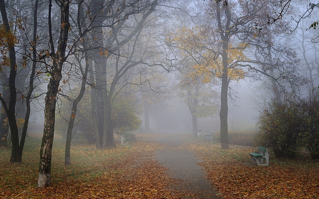 Trees Foliage Bench Misty Park wallpapers