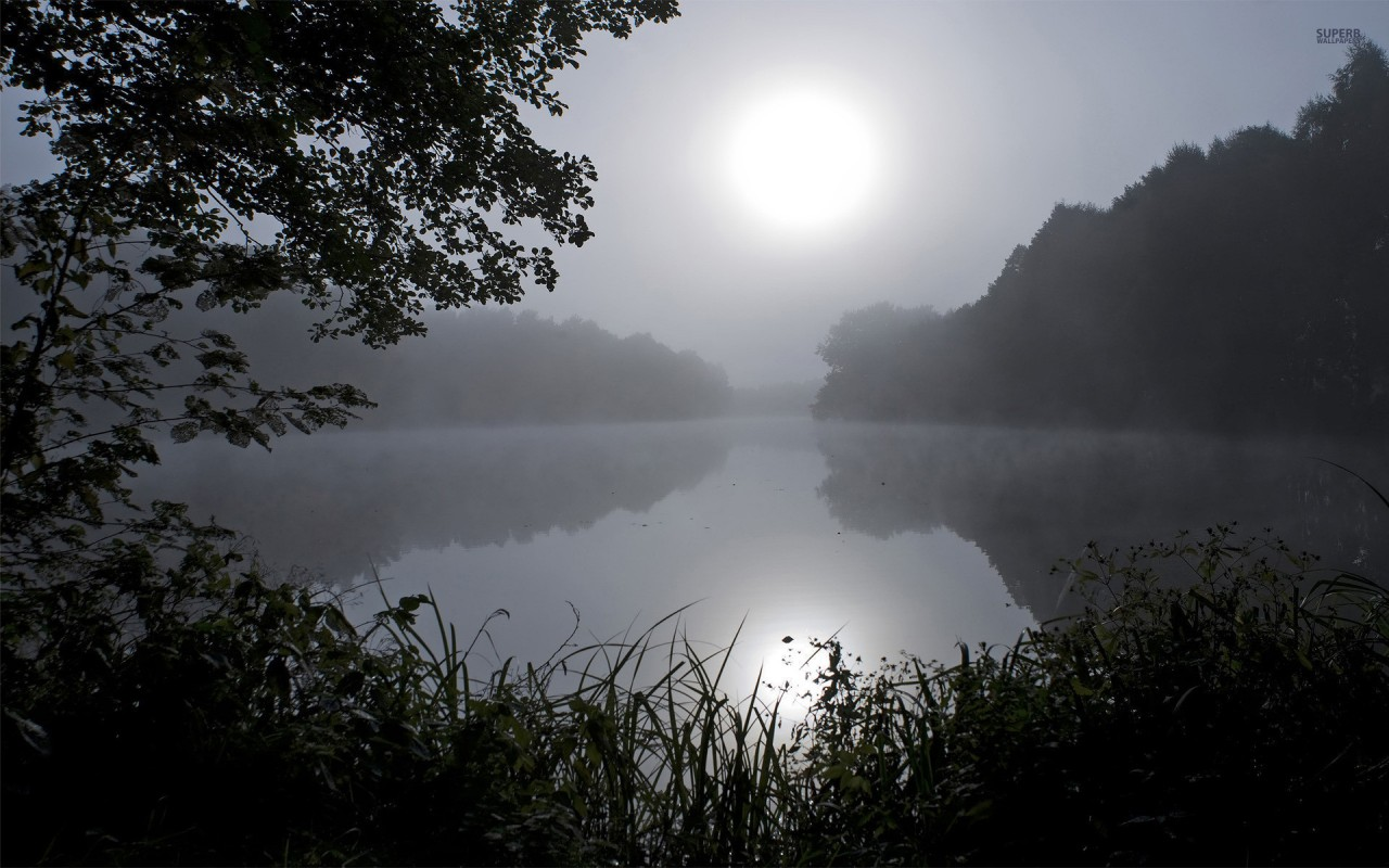 Lake Foggy  U0026 Dark Wood Wallpapers