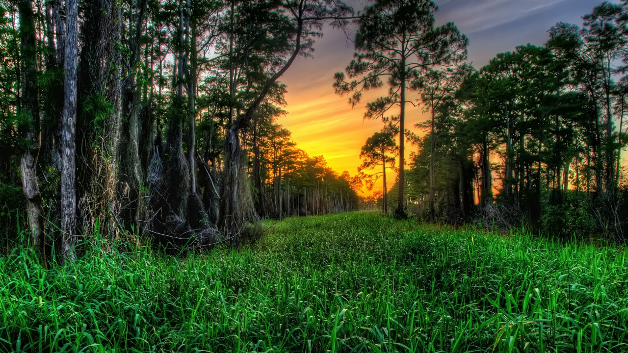 Cypress Forest WetLands Sunset wallpapers
