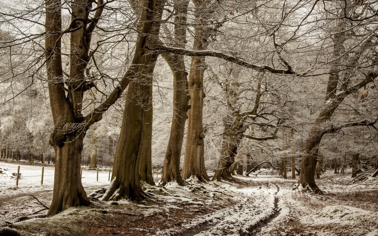 Brown Trees Path Fence Snowy wallpapers