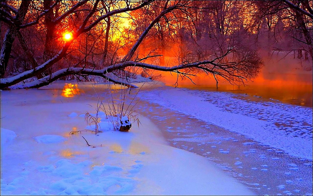 Frozen Sea Snowy Trees Sunset wallpapers