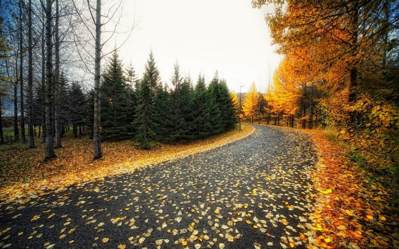 Calico Trees Nice Road Foliage wallpapers | Calico Trees ...