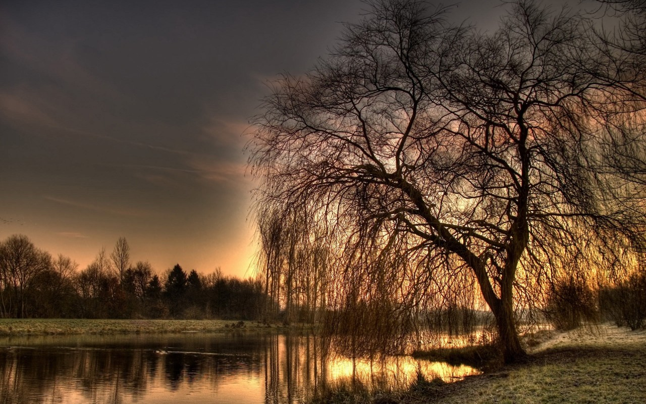Willow Lake Shore Grass Sunset wallpapers