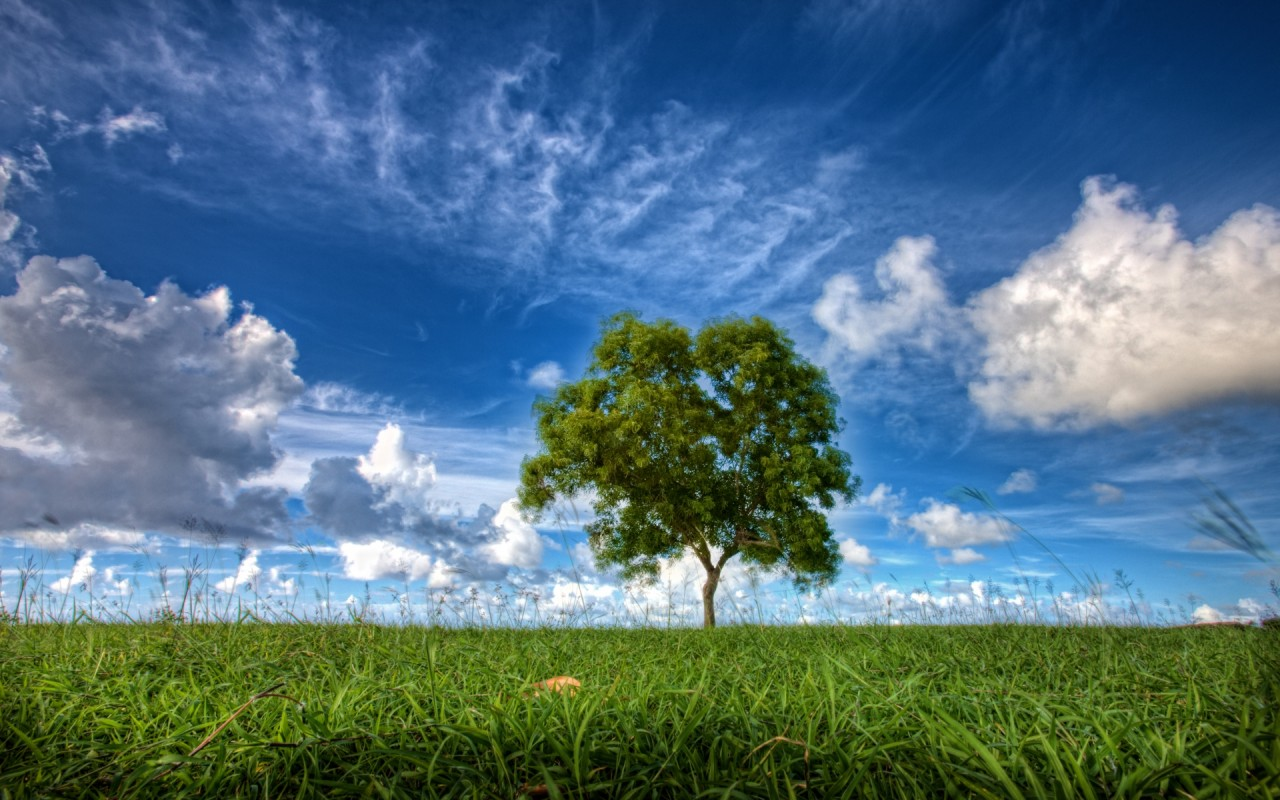 Meadow Tree Blue Sky Clouds Wallpapers