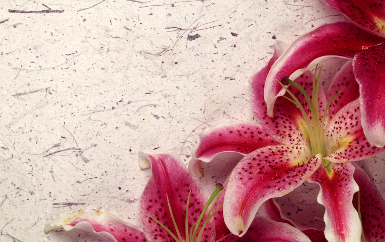 Decor Lily wallpapers