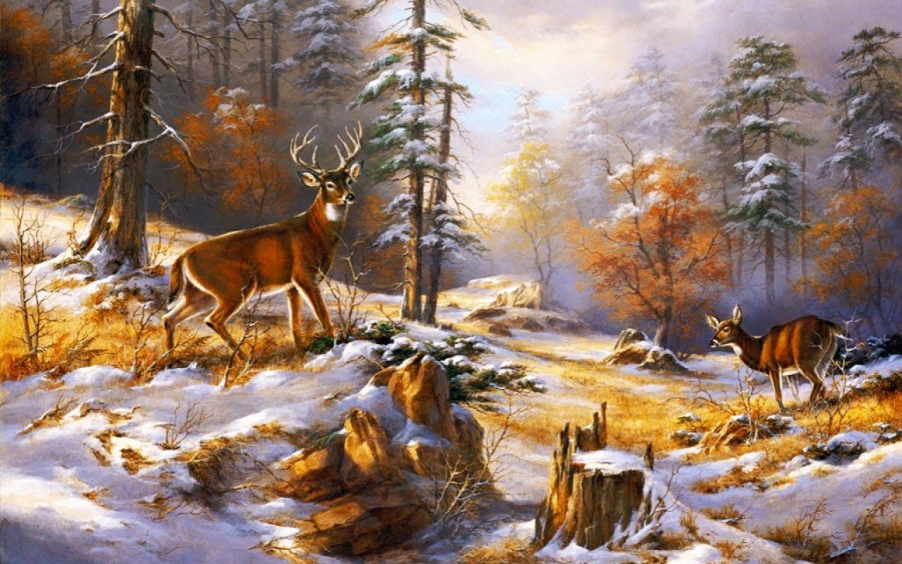 Wood Pretty Deer Early Winter Wallpapers Wood Pretty