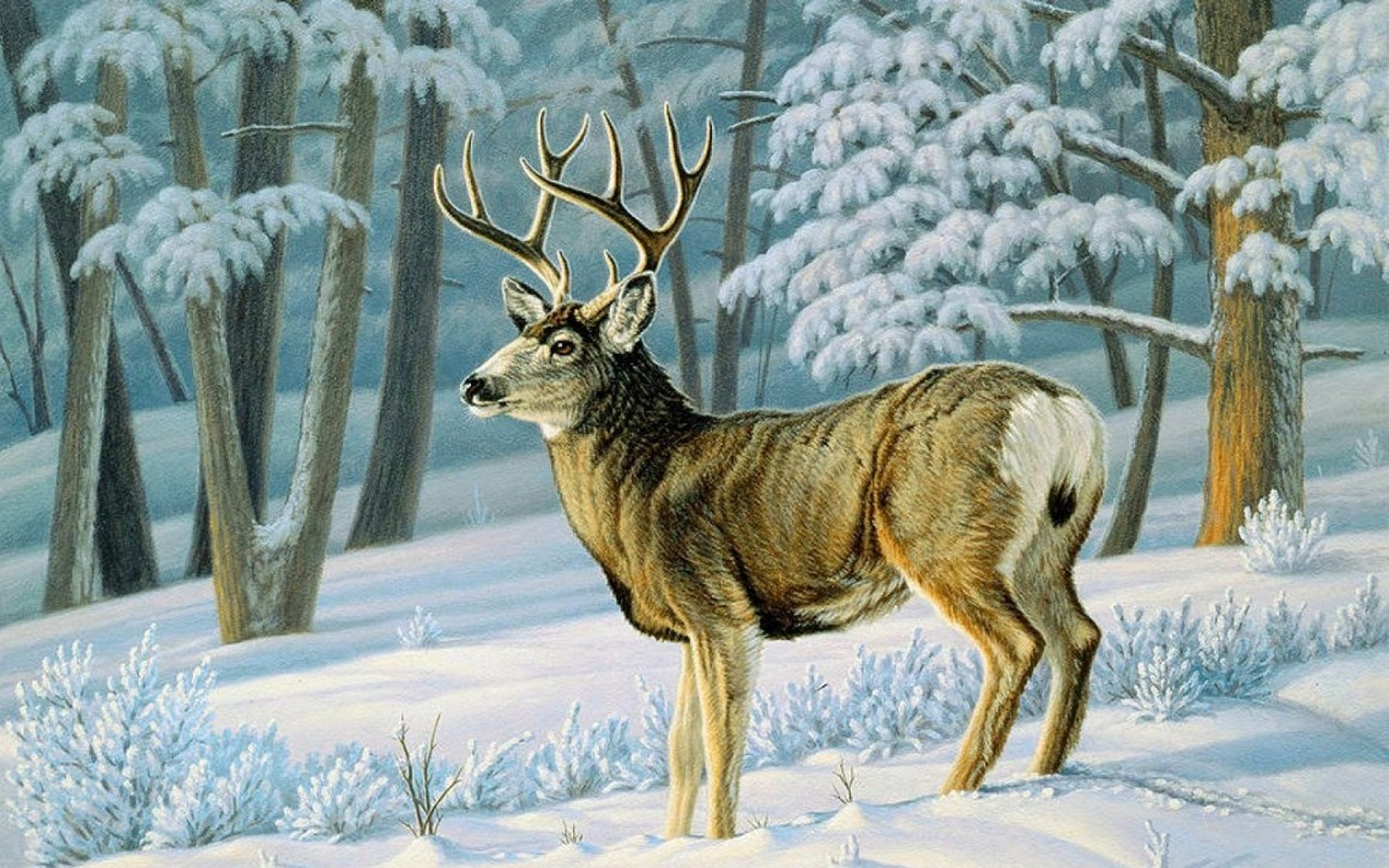 Winter Forest Cute Deer Slope wallpapers