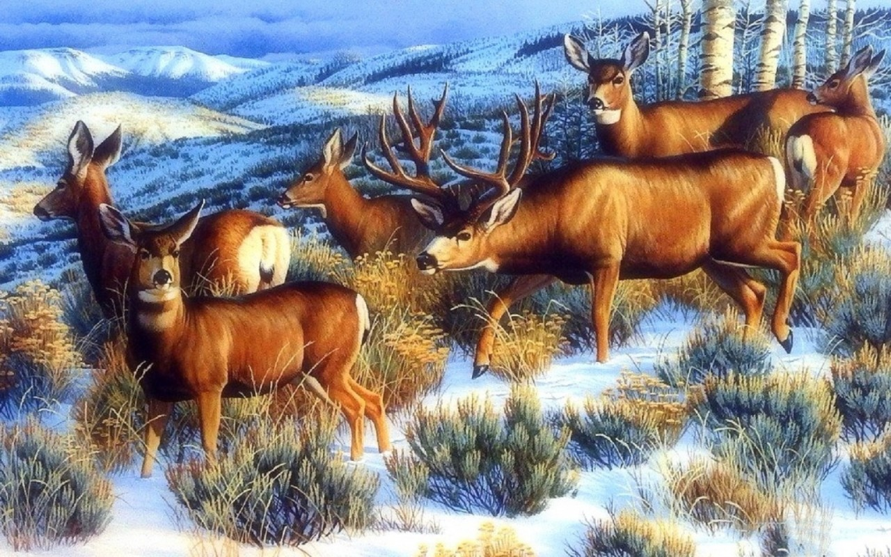 Nice Winter Forest Pretty Deer wallpapers