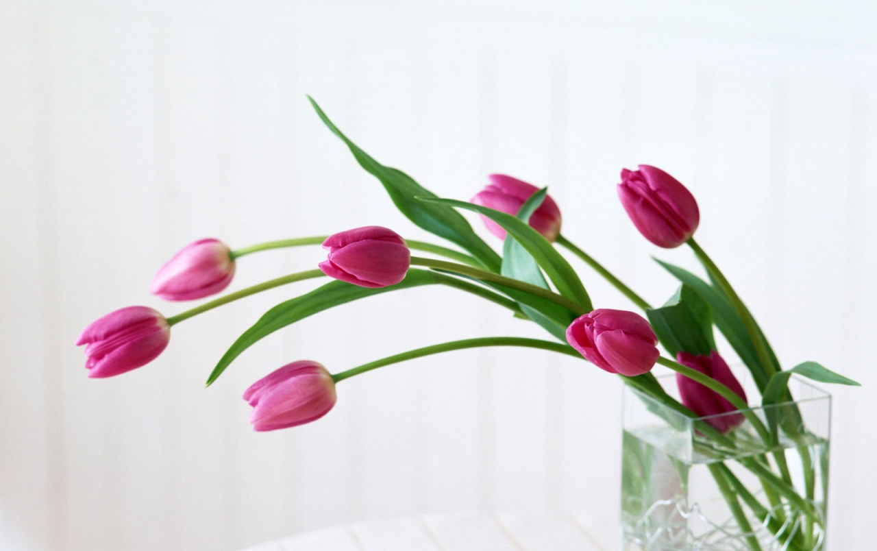 Home flower wallpapers home flower stock photos home flower wallpapers voltagebd Image collections