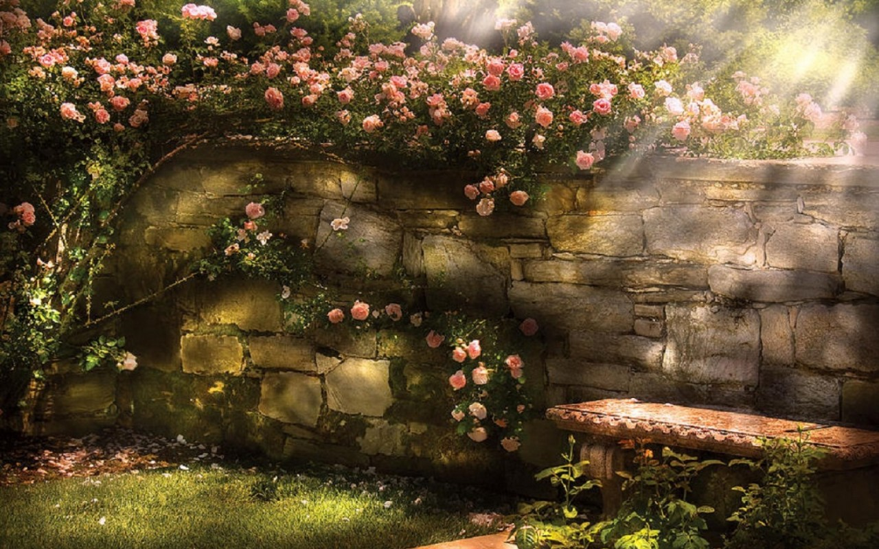 Climbing Rose Wall Bench Sunny Wallpapers Climbing Rose