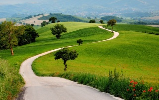Charming Green Hills Way Trees wallpapers