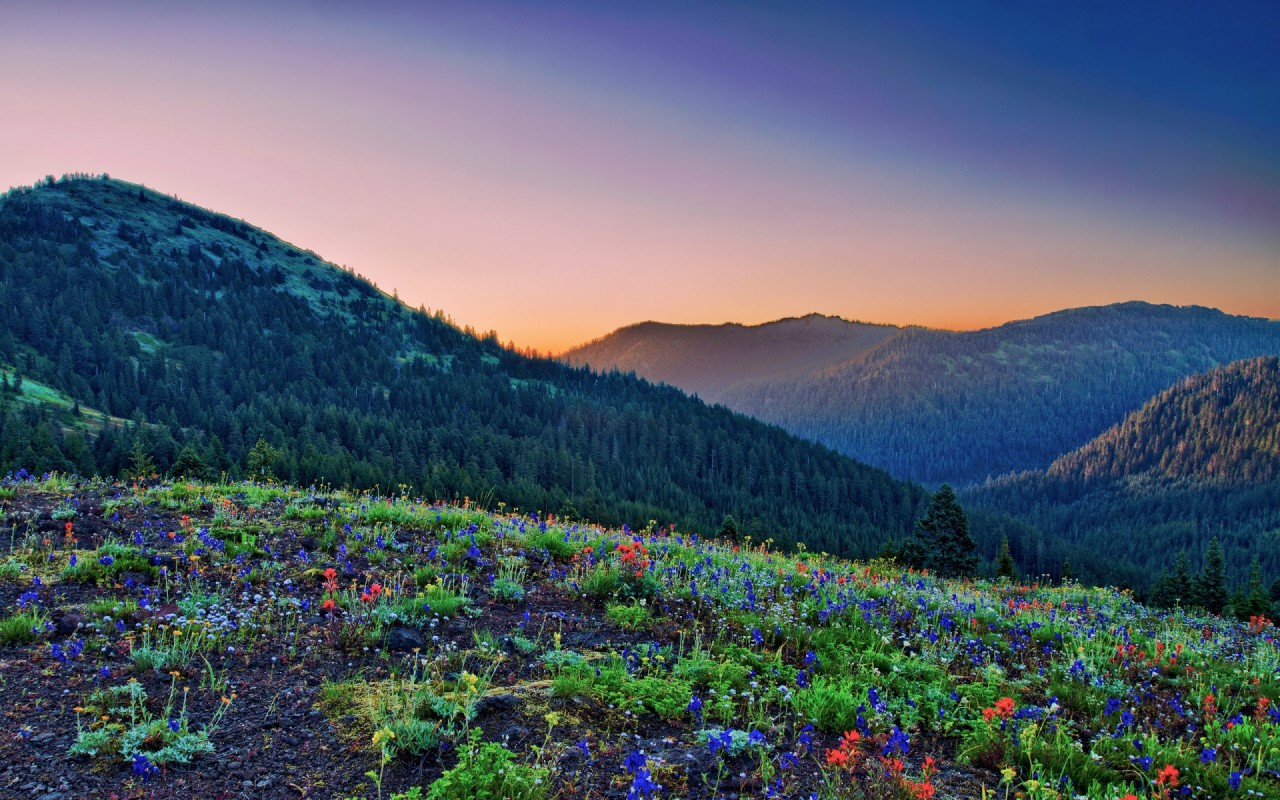 Peaks Forest Flowers Sunset wallpapers