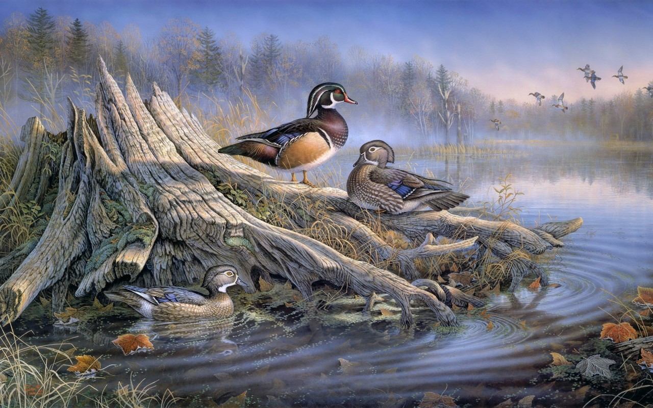 Forest Lake Ducks Stub Foggy wallpapers