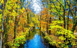Bright Autumn Forest & Creek wallpapers