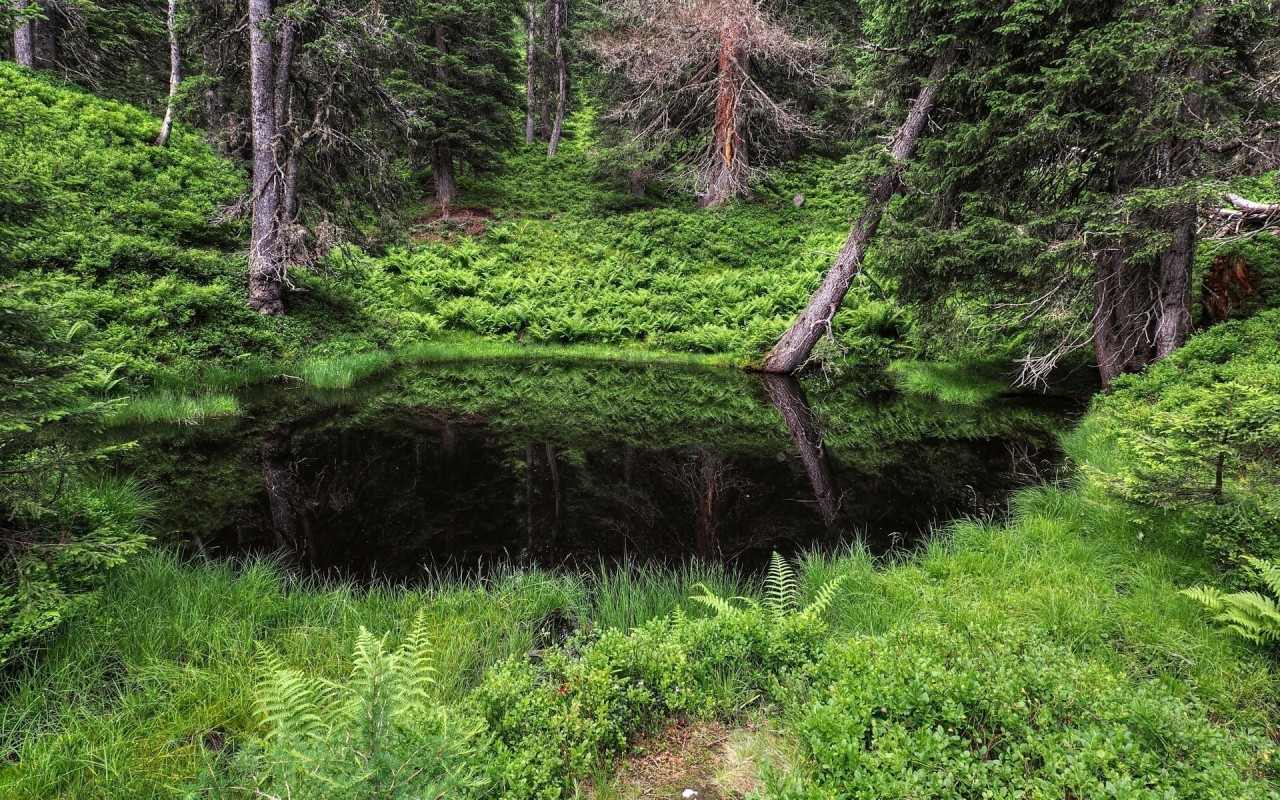 Nice Pond Forest Green Plants Wallpapers