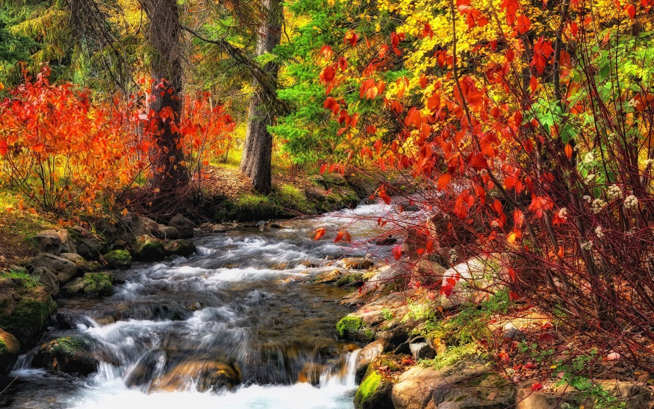 Autumn Bushes & Rushing Creek wallpapers