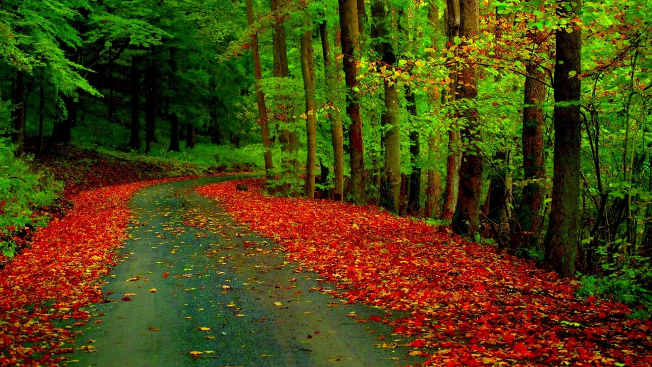 green trees road red foliage wallpapers green trees road red