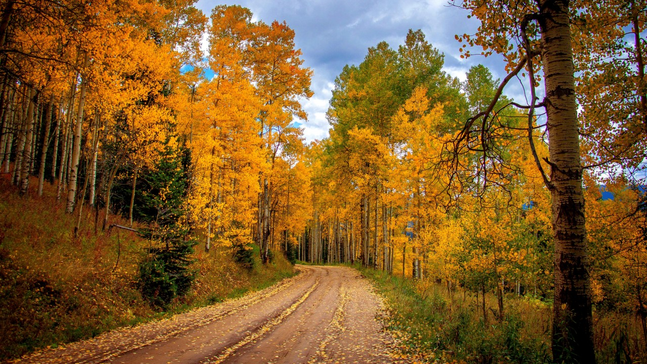 Birch Forest Road Sky Autumn Wallpapers Birch Forest