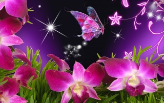 Pink Orchids & Butterfly wallpapers
