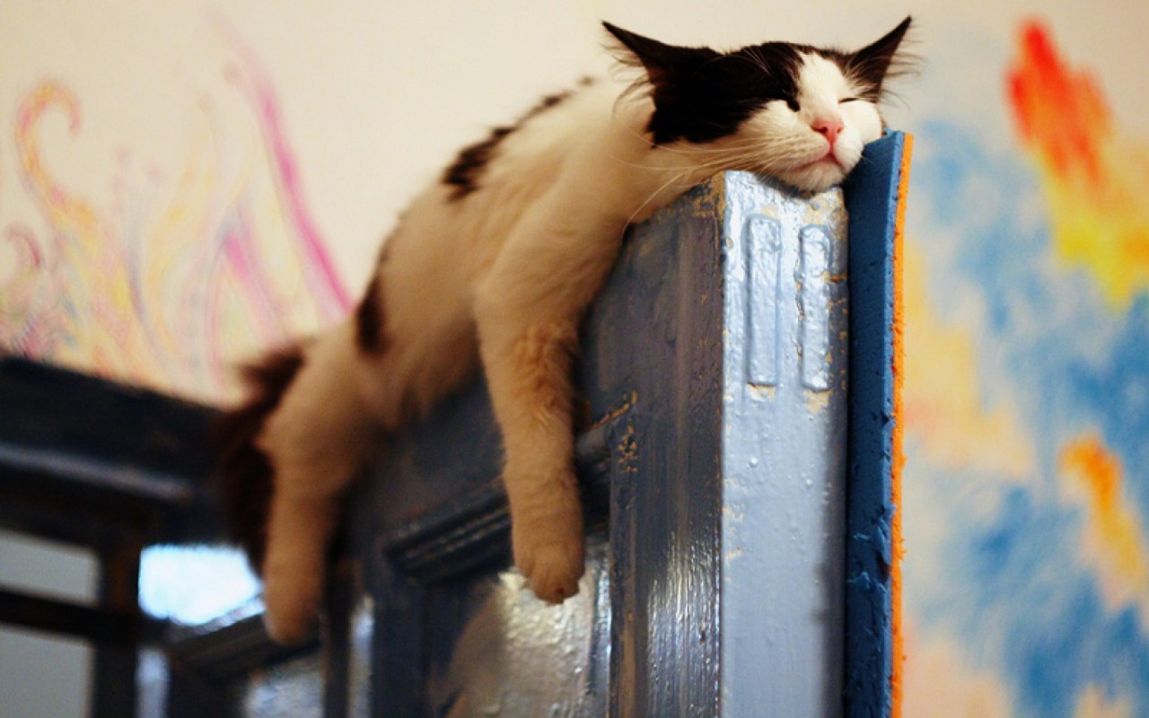 Cat Sleeping On The Door wallpapers