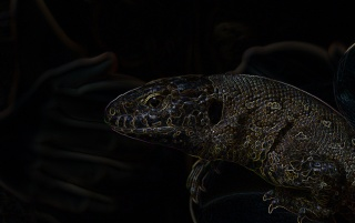 Dark Lizard wallpapers
