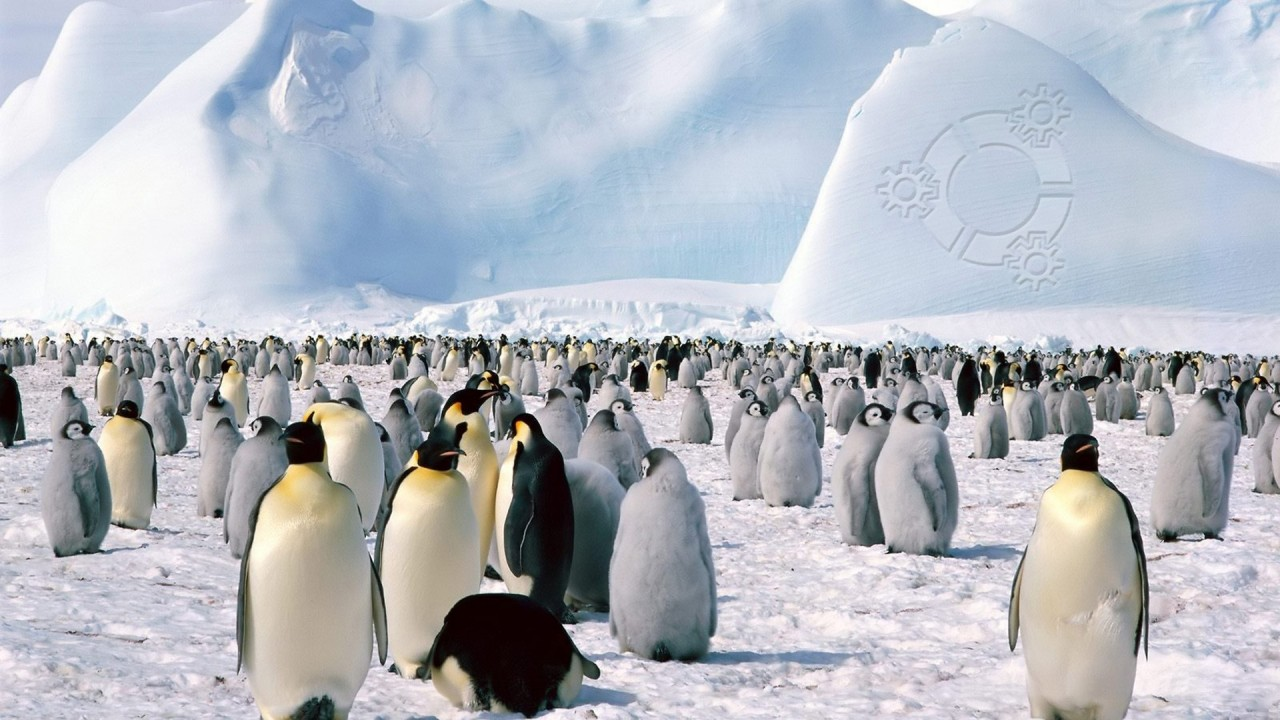 Pinguin, pinguini wallpapers