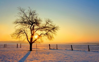 Lone tree in the winter, snow, nature wallpapers