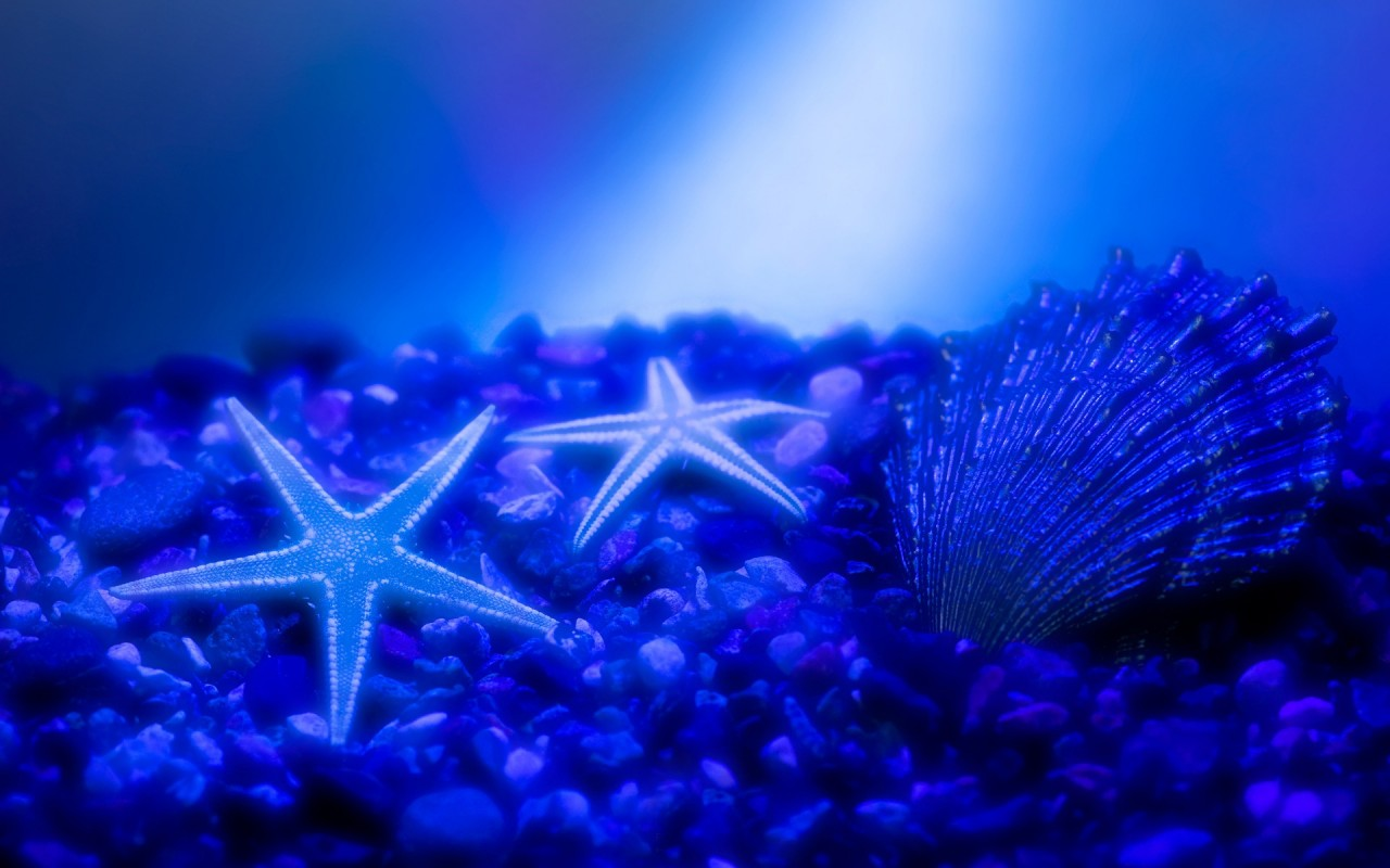 OriginalWide Starfish Stars Wallpapers