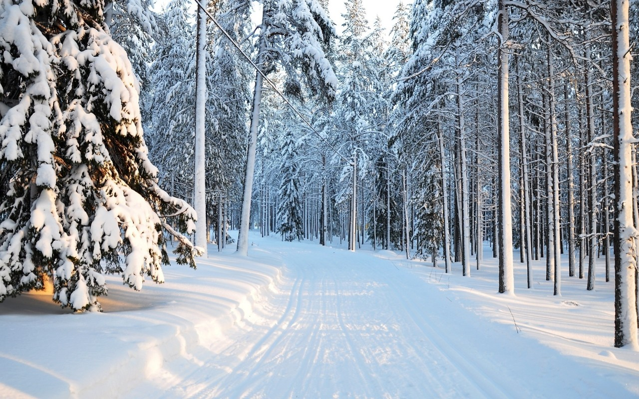 Winter, tree, snow, forest, nature wallpapers