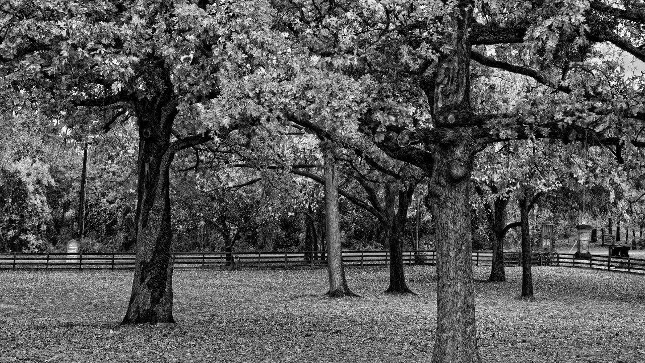 Originalhd black and white trees beautiful scenery wallpapers